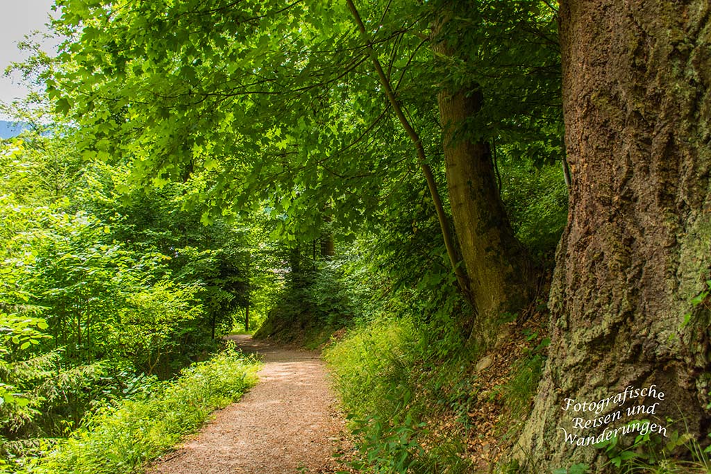 Der Schwarzwaldsteig (133)