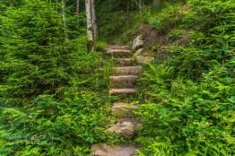 Die Stufen zum geheimnisvollen Wald