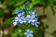 Schmetterlingsgarten Sayn (10)