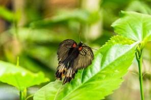 Schmetterlingsgarten Sayn (41)