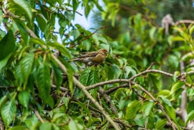 Ein Spatz im Baum