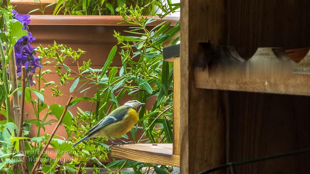 Futterplätze und Nistkästen auf dem Balkon Eichhörnchenhaus