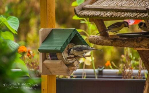 Warum fressen die Wildvögel mein Futter nicht