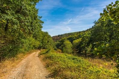 Biber Bäche Eifelwälder(T1) (109)
