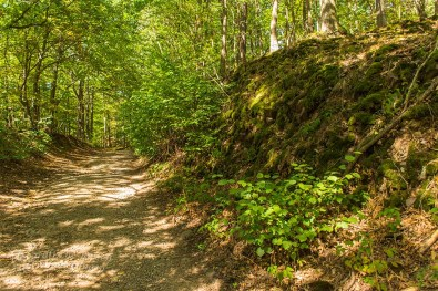 Biber Bäche Eifelwälder(T1) (112)