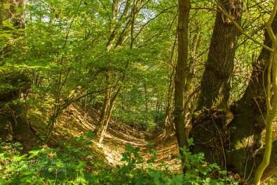 Biber Bäche Eifelwälder(T1) (45)