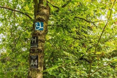 Bigge-Lister-Weg und Sauerland Höhenflug bleiben an meiner Wanderseite