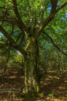 Dieser altehrwürdige Baum steht dort sicher schon viele zig Jahre
