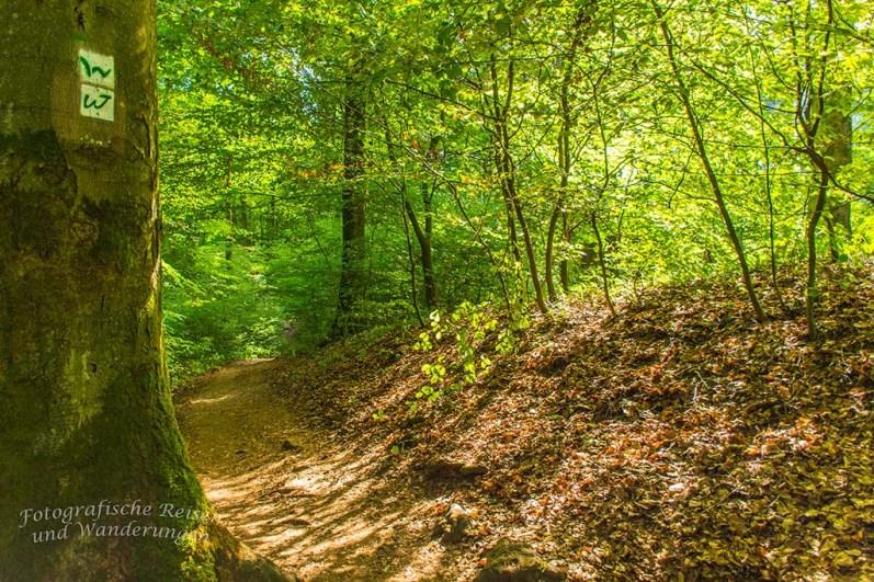 Oberhalb der Holzbachschlucht