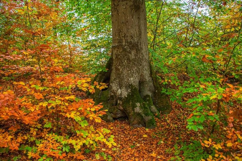 Hurra, Hurra der Herbst ist da
