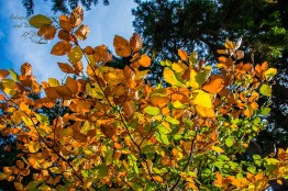 Bunter Blätterstrauß