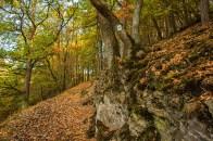 Wald mit solchen markanten Wegen sind ein Geschenk