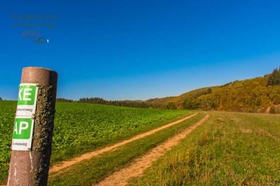 Der Apolloniaweg verläuft nun wegegleich mit dem Keltenrundweg