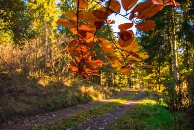 Bunter Herbst auf dem Keltenrundweg Steineberger Ley