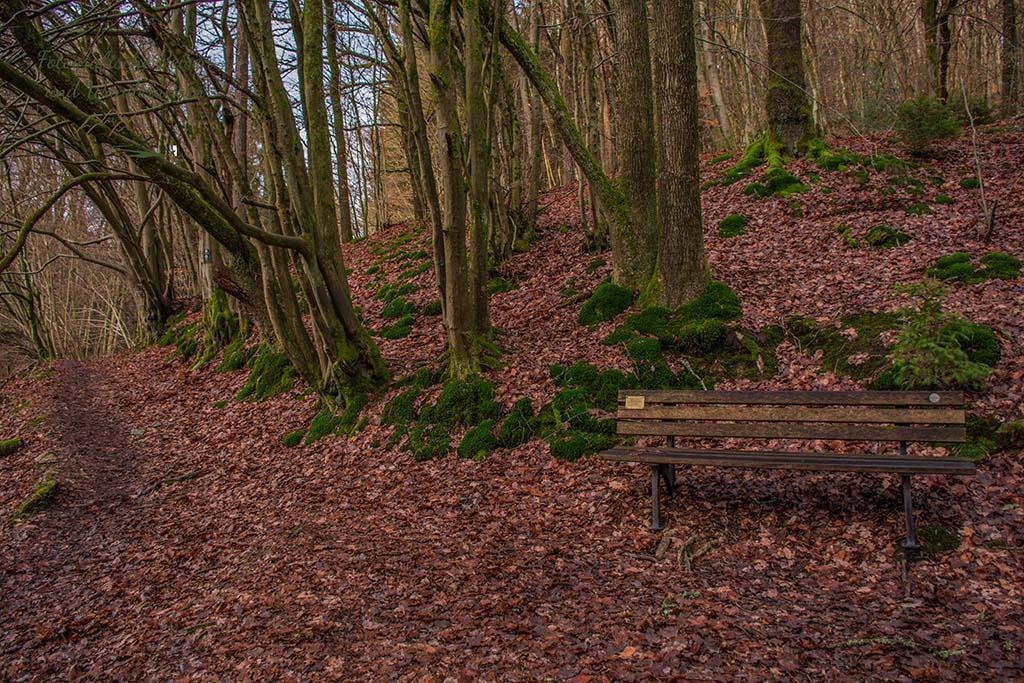 Ein romantischer Platz im Wald