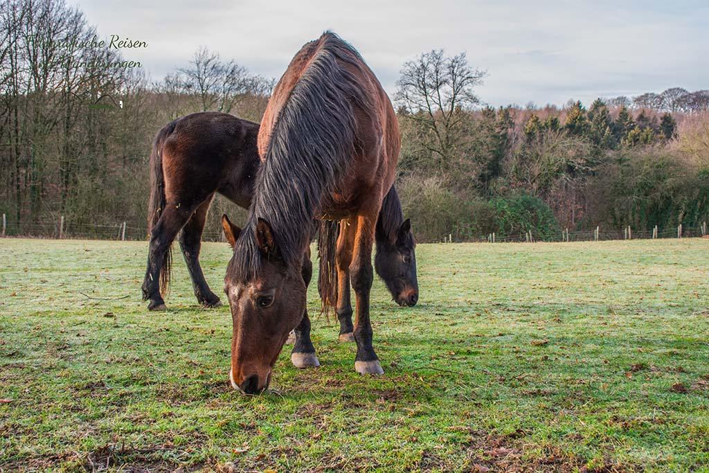Pferde mümmeln ihr Grünzeug