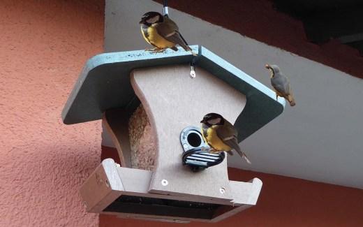 Wintervögel - Die Futterplätze sind leer in Deutschland