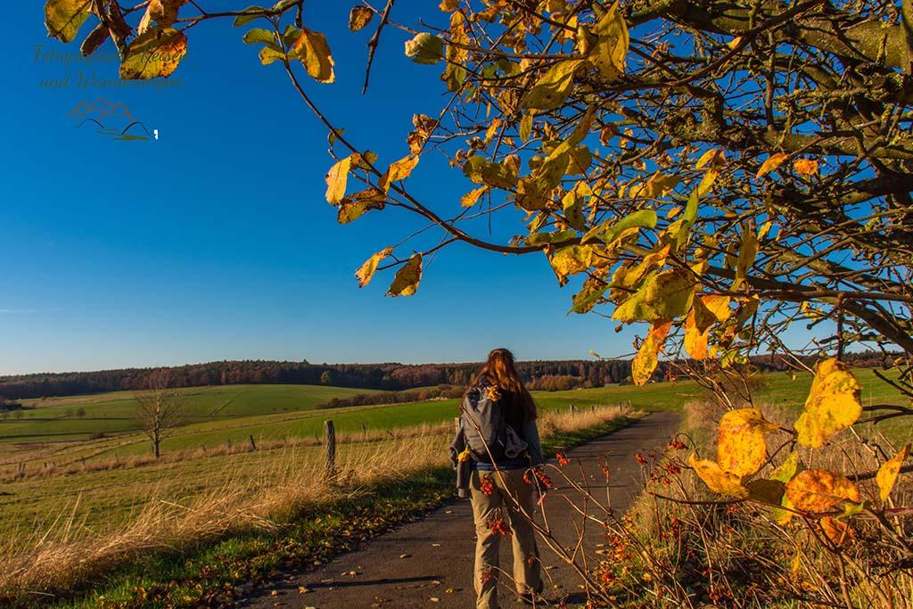 Herbstlicher Ausblick
