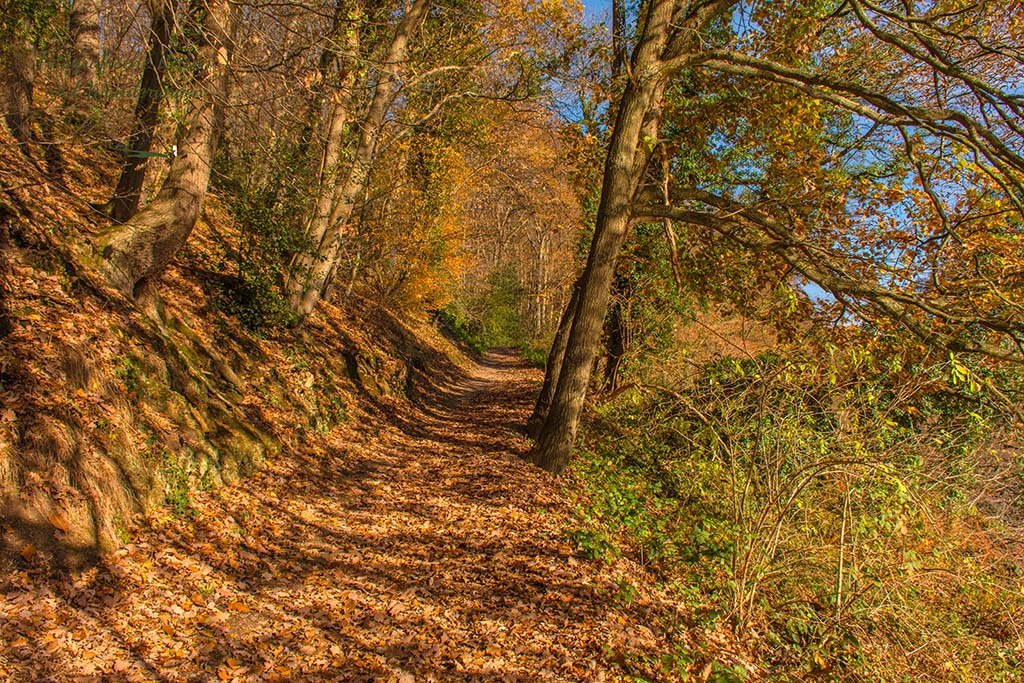 Dicker Laubteppich auf dem Waldweg oberhalb Wupper