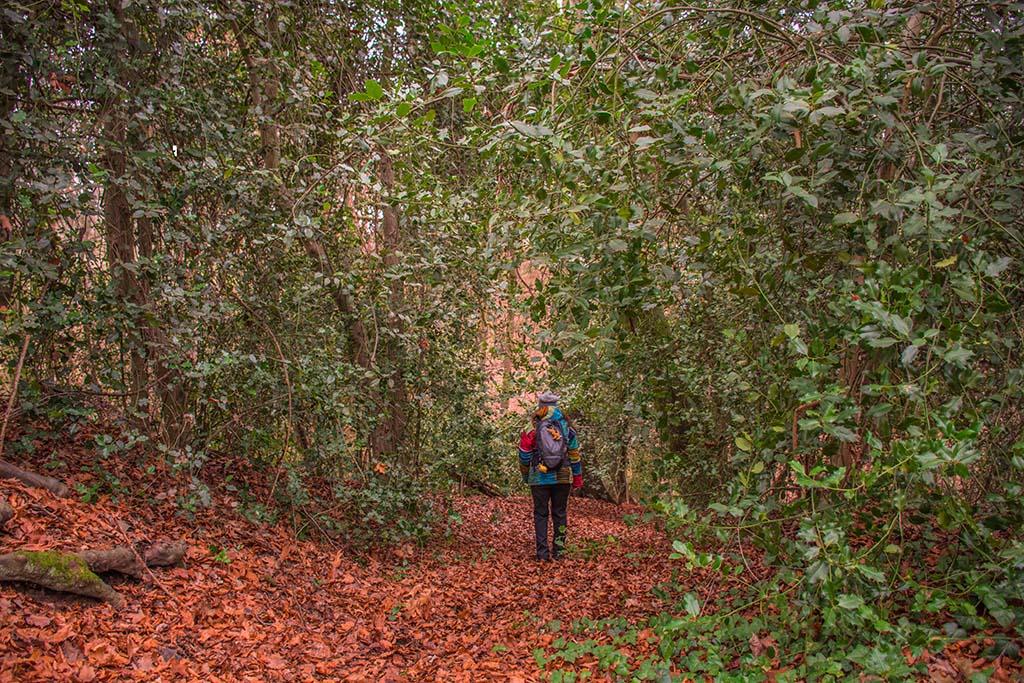 Ilex Wald im Wurmtal