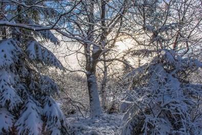 Schneewanderung in Muetzenich (23)