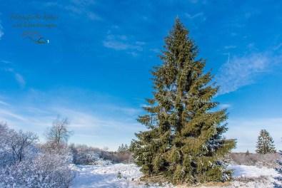 Schneewanderung in Muetzenich (26)