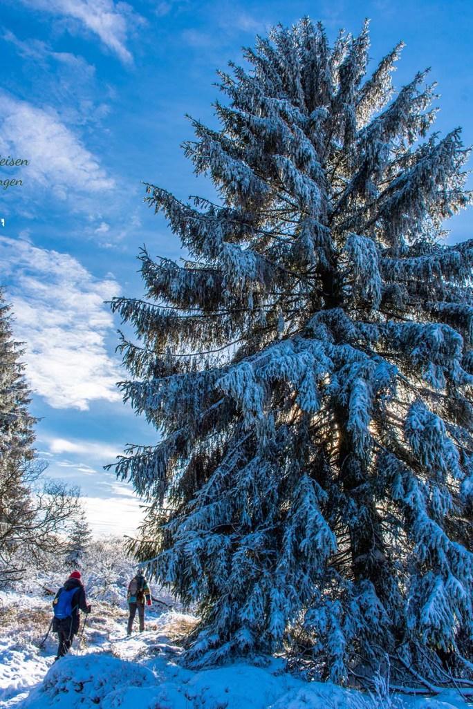 Schneewanderung in Muetzenich (59)