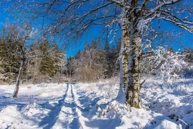 Schneewanderung in Muetzenich (65)