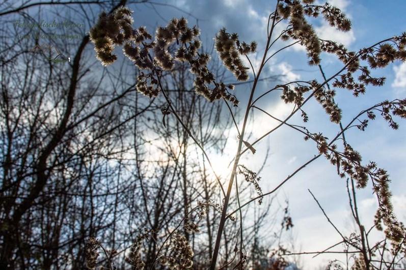 Wahner Heide-Durch die Maikammer (74)