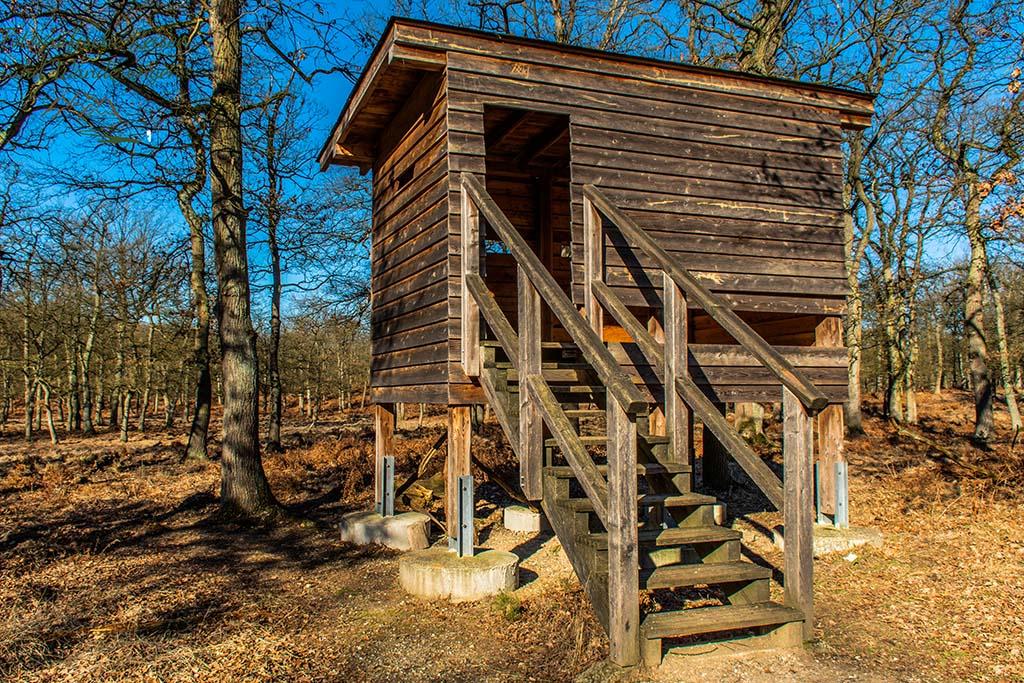 Beobachtungskanzel im Diersfordter Wald - Wandertipp am Niederrhein