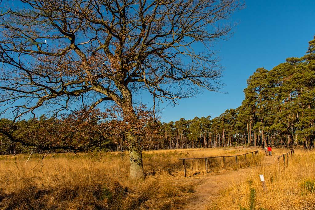 Herrlicher Blick in die Trockenrasen der Region - Wandertipp am Niederhein - Diersfordter Wald