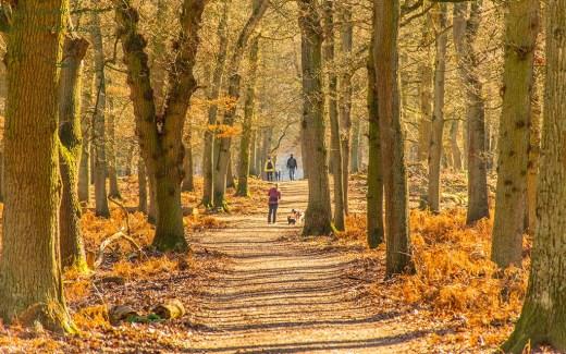 Wandertipp am Niederhein - Diersfordter Wald