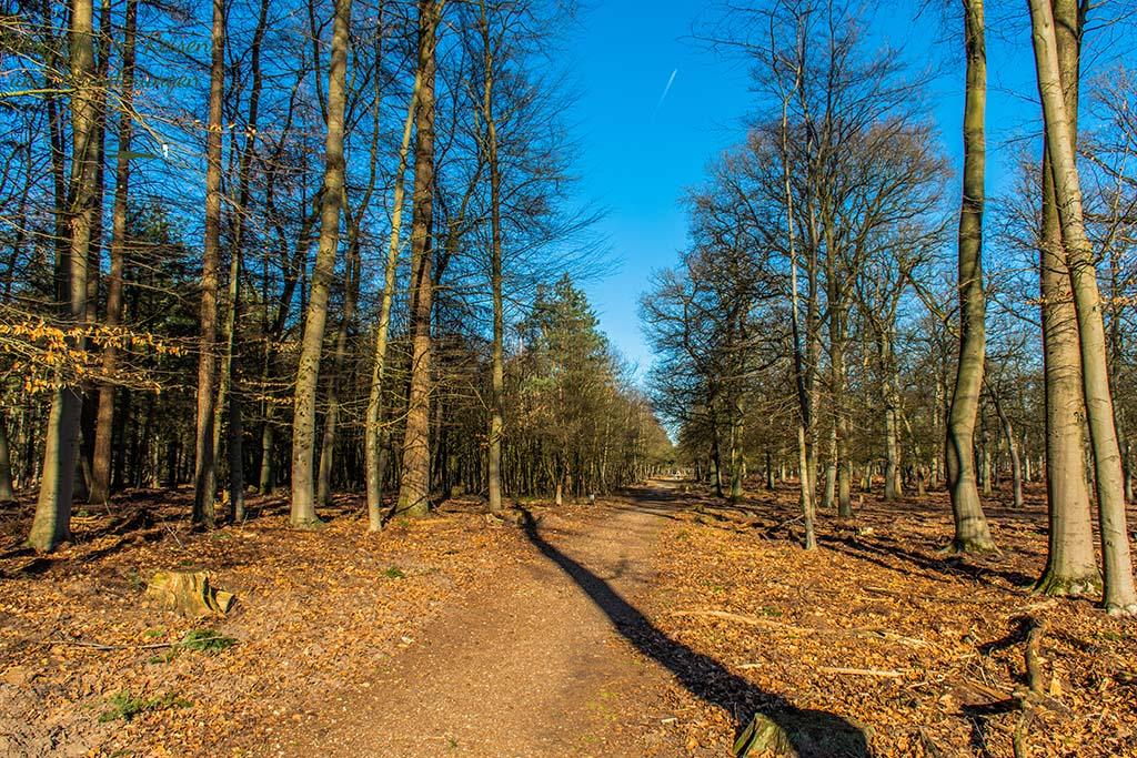 Breite Wege durch den Diersfordter Wald
