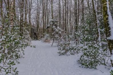 Ein Waldwege mit Schnee - Wandern um das Freilichtmuseum Lindlar