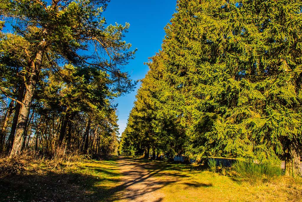 Links Camp Schelde - Zwischen Vogelsang und Wollseifen