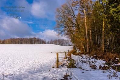Die Weiden hat seit dem Schneefall niemand betreten
