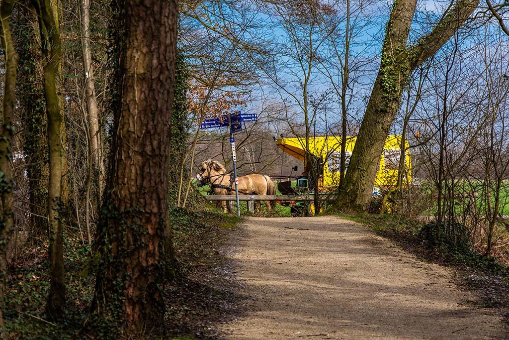 Kutsche auf dem Hessenweg