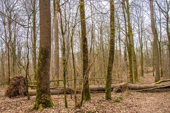 Quer liegende Bäume