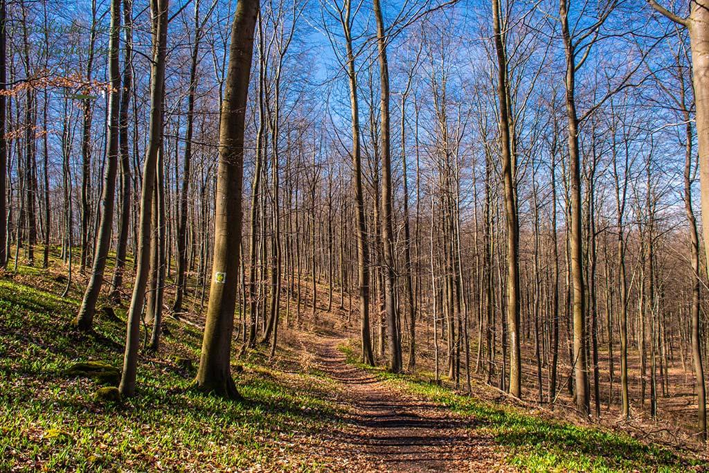 Links und rechts, alles Bärlauch - Wald bei Urft