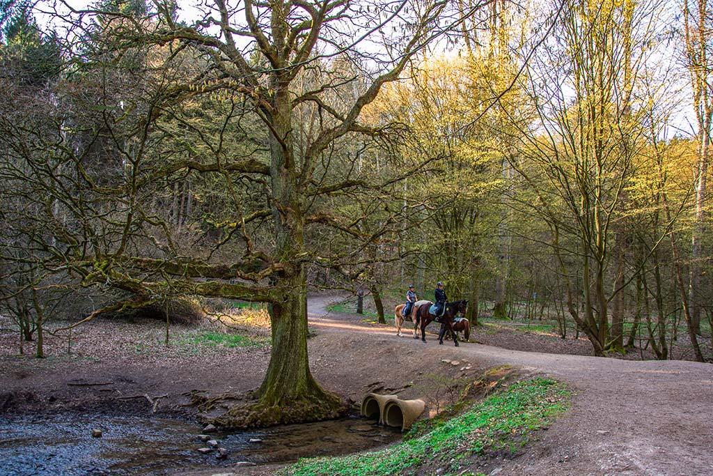 Der alte Baum im Muttenbach