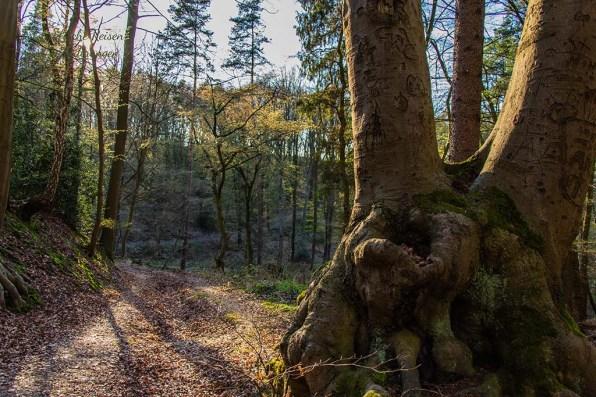 Auf dem Bergbauwanderweg im Muttental begegnen uns alte Bäume