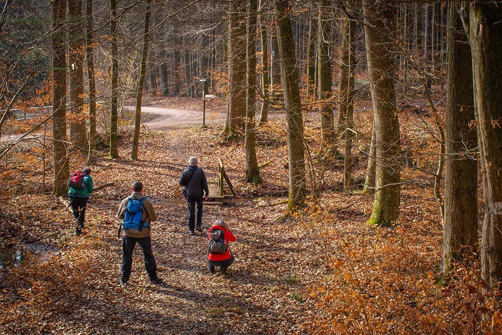 Wäller Tour Elberthöhen - Fotostop im Wald