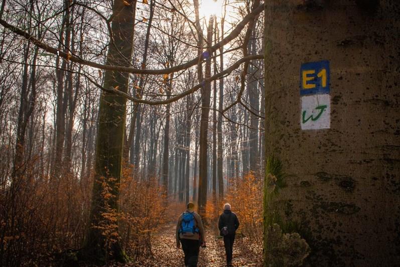 Zeichen der Wäller Tour Elberthöhen am Baum
