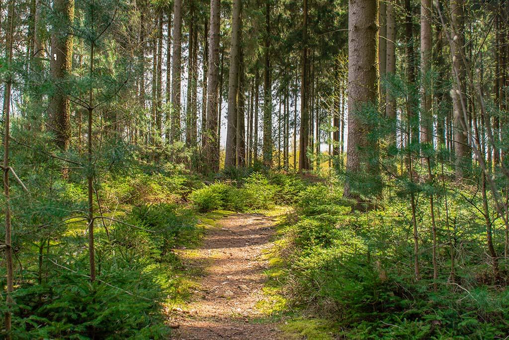 Waldweg nach Rott, mit Sonnenstrahlen