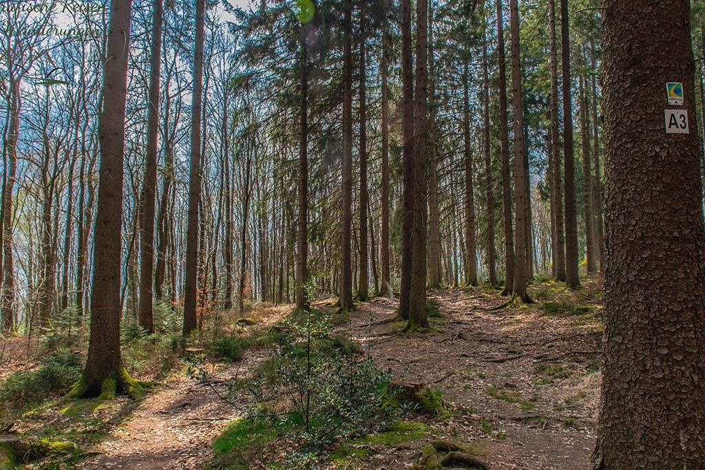 Waldwege, sehr urig- Eifelsteig Etappe 1