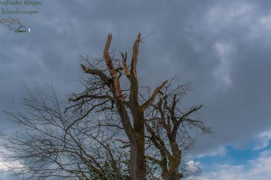 Abgebrochene Bäume- Vom Tornado abgesägt