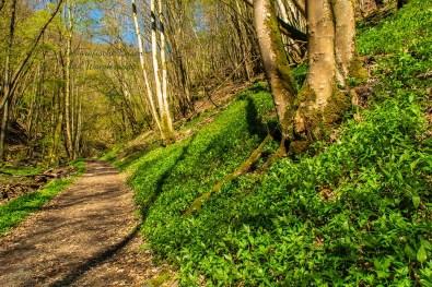 Grüne Teppiche rechts am Waldweg - Wandern an der Wilden Endert