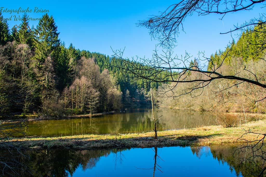Perlenbachtalsperre im Morgenlicht - Wilde Narzissen in der Eifel suchen