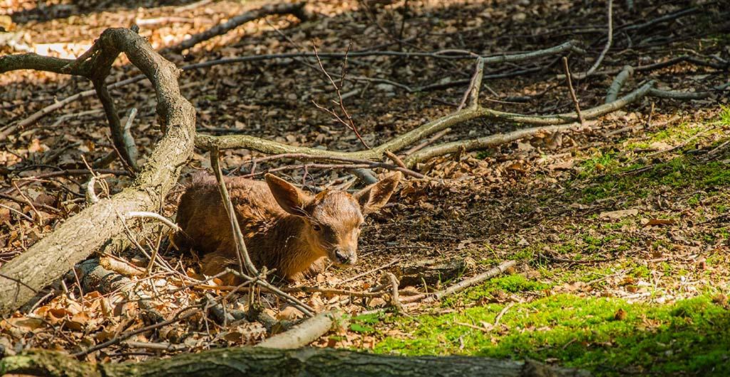 Setzzeit und Brutzeit in Wald und Feld