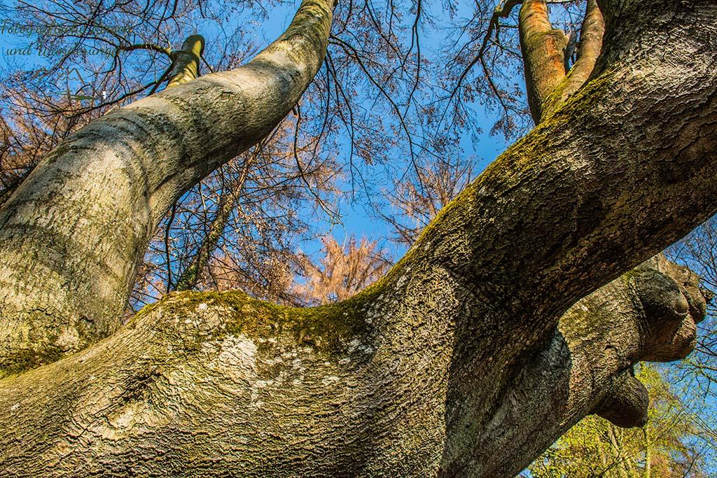 Mächtige Arme eines Baumes